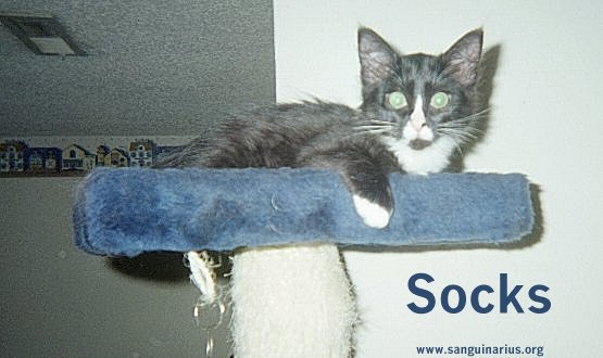 Socks in Crow's Nest of the cat perch